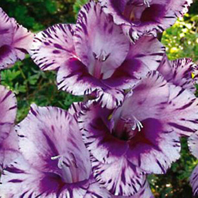 Orchid Seeds Set (100 Pieces)