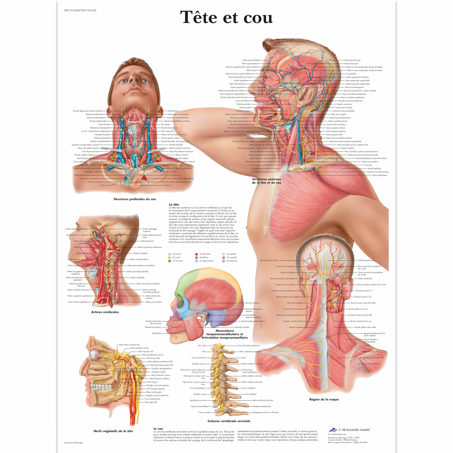 Anatomy Pathology Anatomical Human Body Part Head To Neck Classic