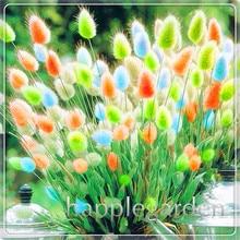 Ornamental Grasses Bonsai 100 Pcs Bunny Rabbit Tails Grass Plants Adorable Lawn DIY Home Garden Plant