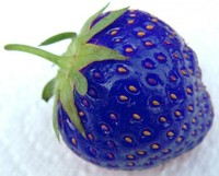 Hot Selling 100pcs/bag Blue Strawberry Seed Bonsai Plant Garden Decoration Bonsai Flower Seeds