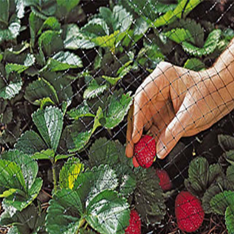 Bird Net Polyethylene Anti Netting Pond Crops Fruit Tree Vegetables Protection Flower Garden Mesh Protect Gardening Pest Control
