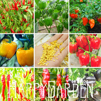 New Seeds 2016! 20 Pieces/Pack Rainbow Tomato seeds, bonsai organic vegetable & fruit seeds,potted plant for home &garden