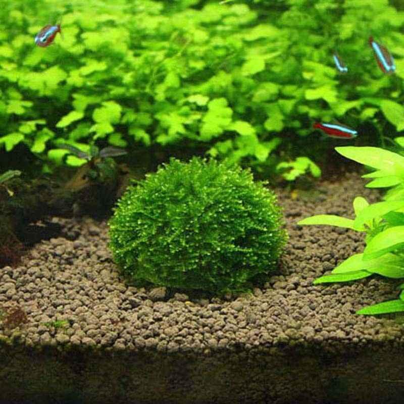 Hồ Cá Cá Nhựa Rêu Bóng Lọc Sống Vật Có Giá Đỡ Thủy Sinh Tinh Tế Trang Trí Vật Trang Trí Đồ Cho Thú Cưng
