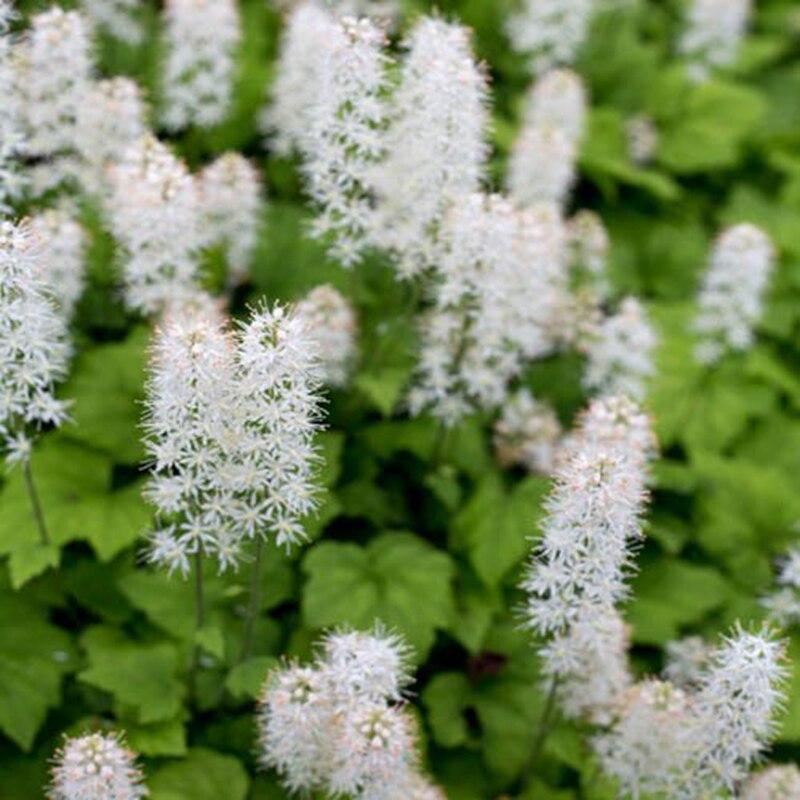 acquista all'ingrosso online ombra fiori da giardino da grossisti ... - Un Piccolo Giardino Fragrante