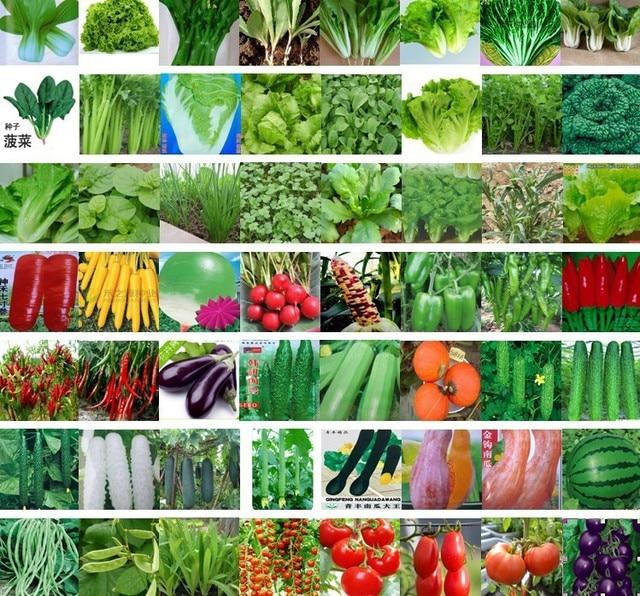 5000 unidades 54 clases de verduras semillas cada paquete for Semillas de frutas y verduras