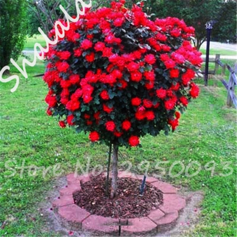 popular exotic red flowersbuy cheap exotic red flowers lots from, Natural flower