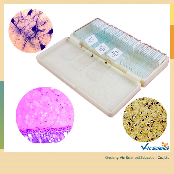 Free Shipping 100pcs Animal Histology Prepared Slides free shipping 100pcs mixed biology prepared slides