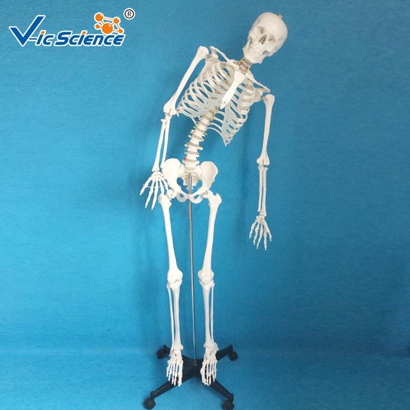 100% Direct Factory 180 Cm Full Size Human Skeletal Model