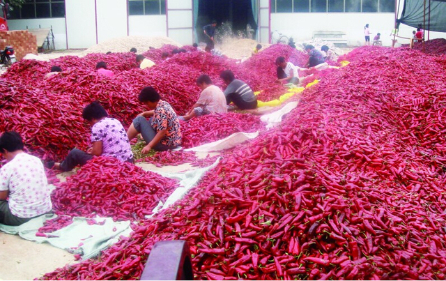 Red pepper Vegetable Seeds 100pcs