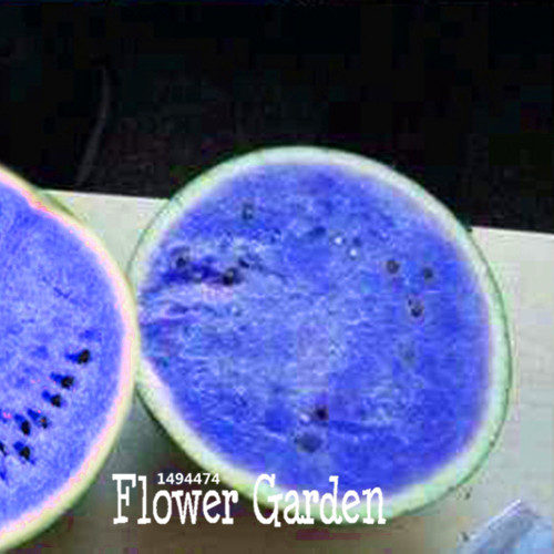 Sale!50 Seed/Lot Seeds Blue Flesh Watermelon Seeds Water ...