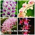 Горячая Продажа!!! 100 шт. 22 цветов Редкие Cymbidium орхидеи, африканские Cymbidiums семена, бонсай семена цветов, растений для дома сад,
