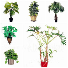 2017 New Seeds Hot Sale 100 Pcs/Bag Philodendron Seeds,  Indoor Plants Anti Radiation Absorb Dust Tree Seeds Home Garden Bonsai