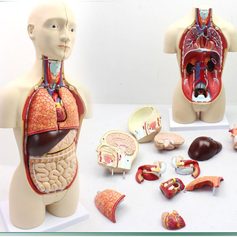 Human Sexual Organ 56