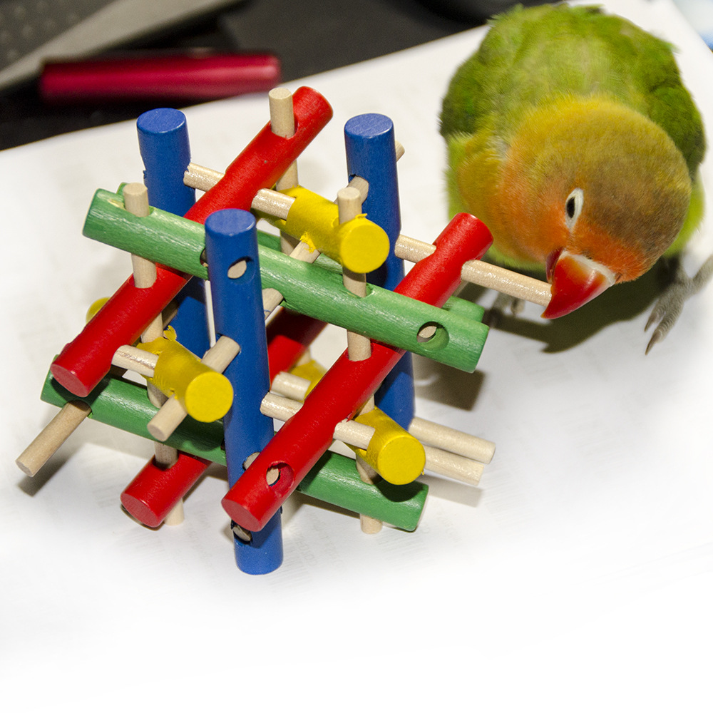 Parakeet Toys And Accessories : Traumdeutung parrot toys for bird ball accessories