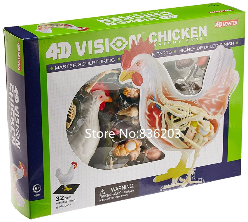 4D master chicken full skeletion funny ANATOMY MODEL medical human ...