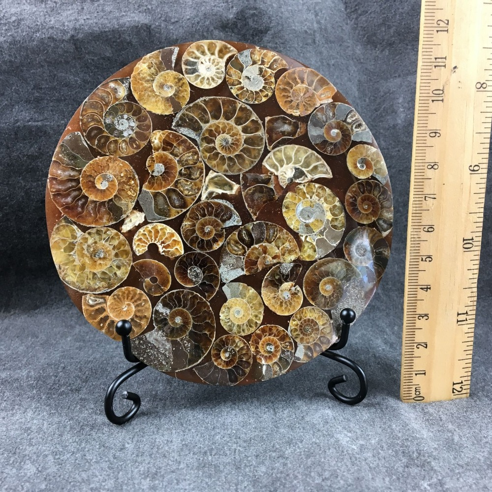 Natural ammonite fossil conch Crystal specimen healing 1PC 200g in Stones from Home Garden