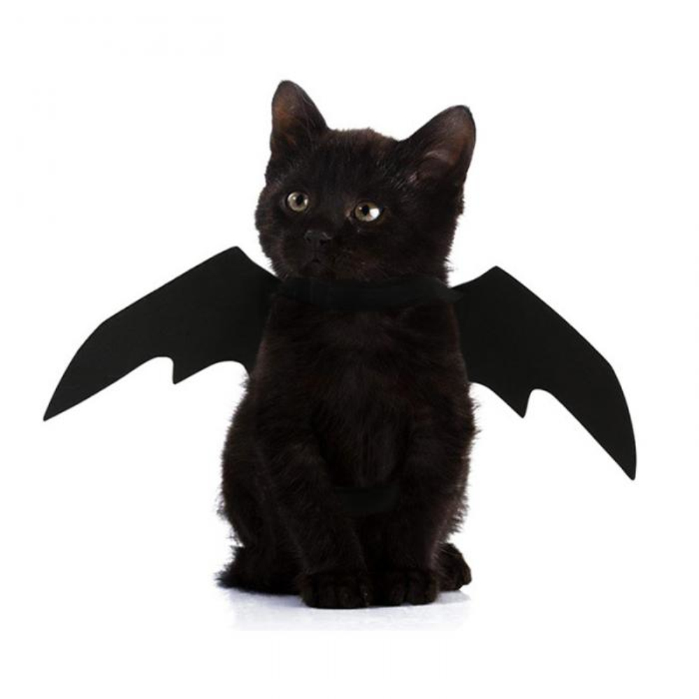 Halloween Cat Bat Costume