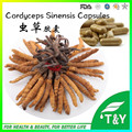 pure cordyceps sinensis extract capsules with best price 500mg*500pcs/lot free shipping