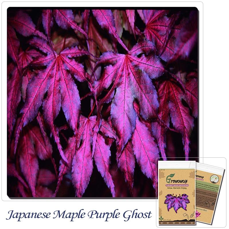"Tree seeds 20pcs ""Purple Ghost"" Japanese Maple Seed Novelty bonsai! Home gardening DIY!"