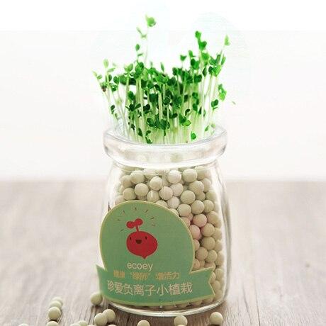 Indoor Living Room Grass Bonsai Seeds Heart-shaped Herb Love Grass Office Green Colorful Bonsai Seeds Decor for Kids Room