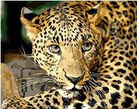 MaHuaf X1399 Moustached Leopard DIY Oil Painting By Numbers On Canvas Hand Painted Digital Wall Art