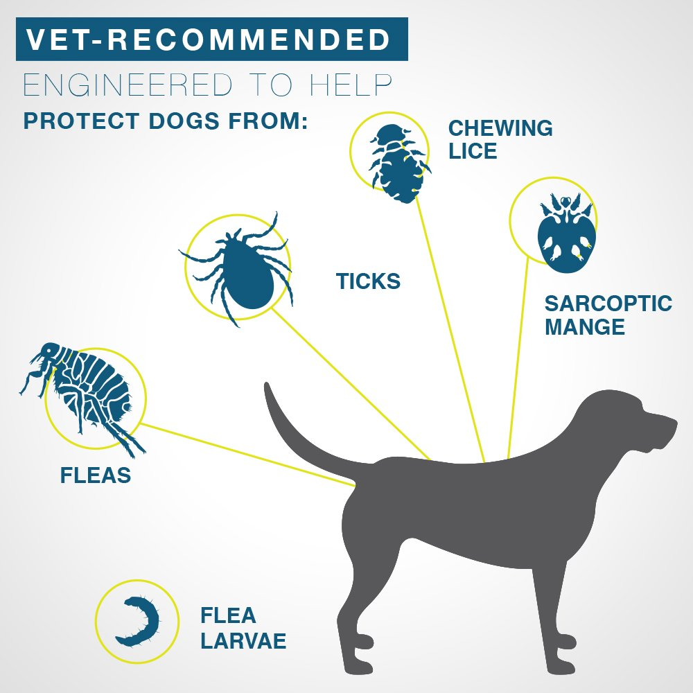 Bayer Seresto 8 Month Flea Tick Prevention Collar for Dogs in Dog Accessories from Home Garden