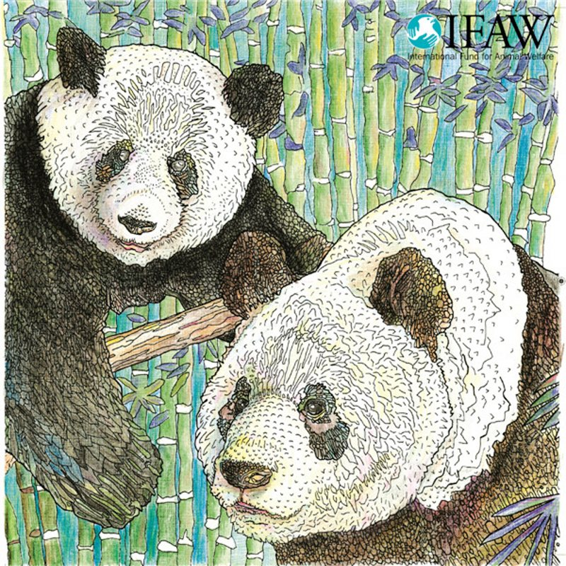 US $23.19 |96 Pages Endangered Animals Coloring Book For Adults Children  Colouring Book Graffiti Painting Drawing Art Coloring Books Gifts-in Books  ...