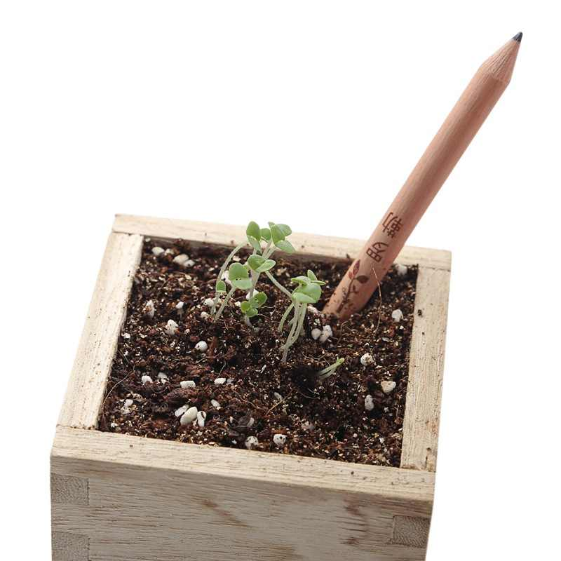 8pcs/set Novel Exotic Sprouts Pencil Germination Can Be Planted Pencils Buds Contains Different Seeds Outdoor