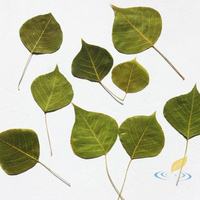 50 Pcs Chinese Tallow Tree Leaves Specimens Green Kids DIY Card Handmade Aids Material