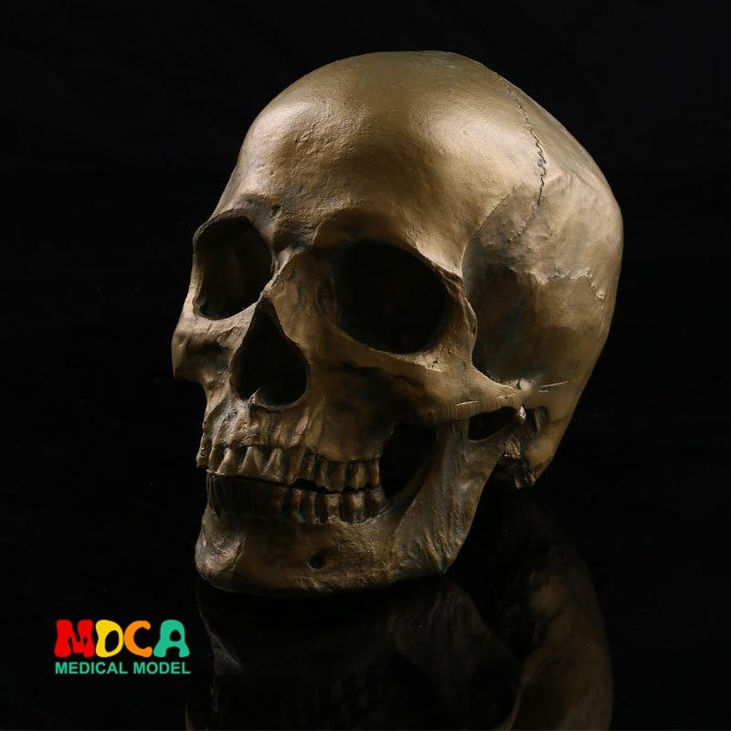 Human Skull Model Medical Simulation Teaching Equipment Resin Skull Ornament Gift YTTG004