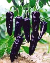 Rare vegetable Purple Pepper Marconi Paprika DIY Home Garden Seasons Chili Plant Terrace Potted Vegetable Bonsai 120 PCS