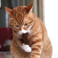Cat Chew Toy