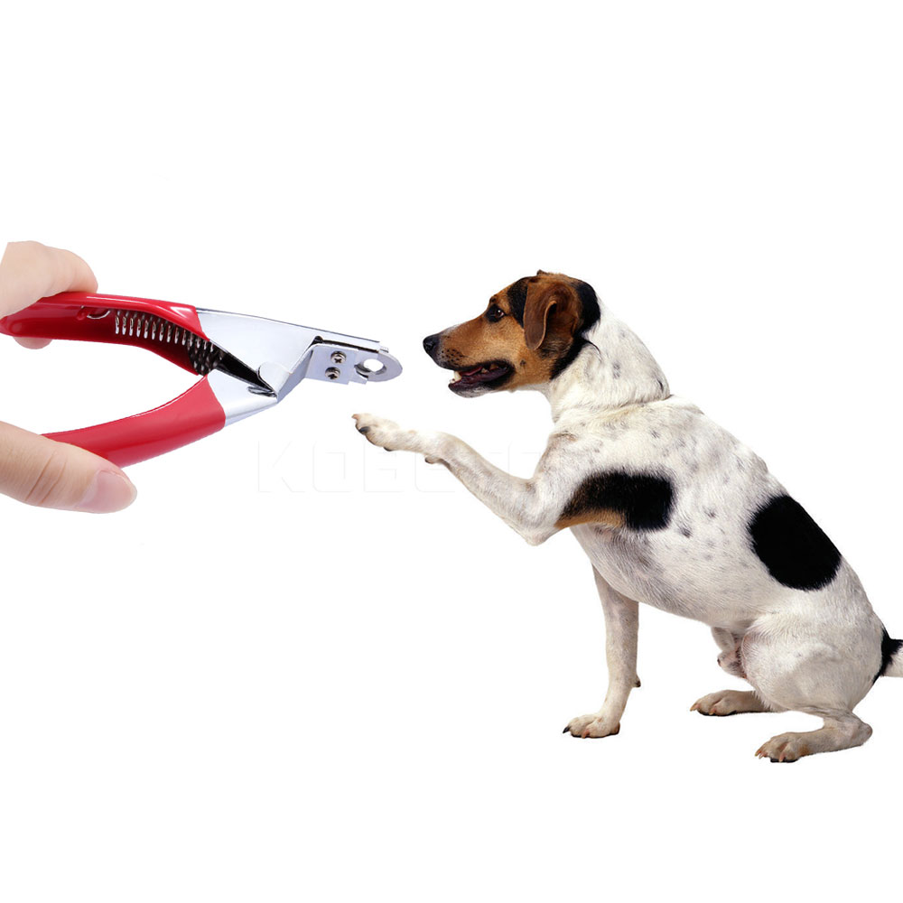 Dog Cat Nail Clippers Animal Toe Claw Scissors Dog Cat Toe Paw Nail ...