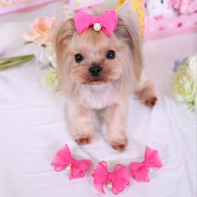 Yorkshire Terrier And Poodle Hair Accessories Pet Grooming