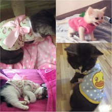 spring-pet-cat-clothes