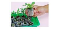 Freeshipping 50 sztuk partia 25mm jiffy torf sadzenia cięcia ogrodnicze począwszy nasiona nasiona warzyw shovelingNew sadzarka potrzeba tanie tanio Garnki przedszkola Nie powlekany WX158 Nursery Block