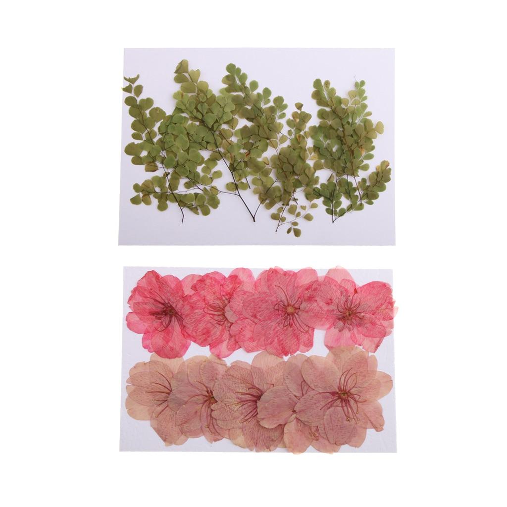 20 шт прессованный настоящий цветок адиантум Сушеная вишня для декоративный чехол для телефона