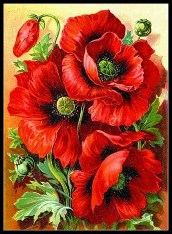 Embroidery Counted Cross Stitch Kits Needlework - Crafts 14 Ct DMC Color DIY Arts Handmade Decor - Oriental Red Poppy
