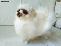 Large 24x8x20cm White Pomeranian Model Prop Polyethylene Furs Dog Handicraft Miniatures Decoration Toy Gift A1625