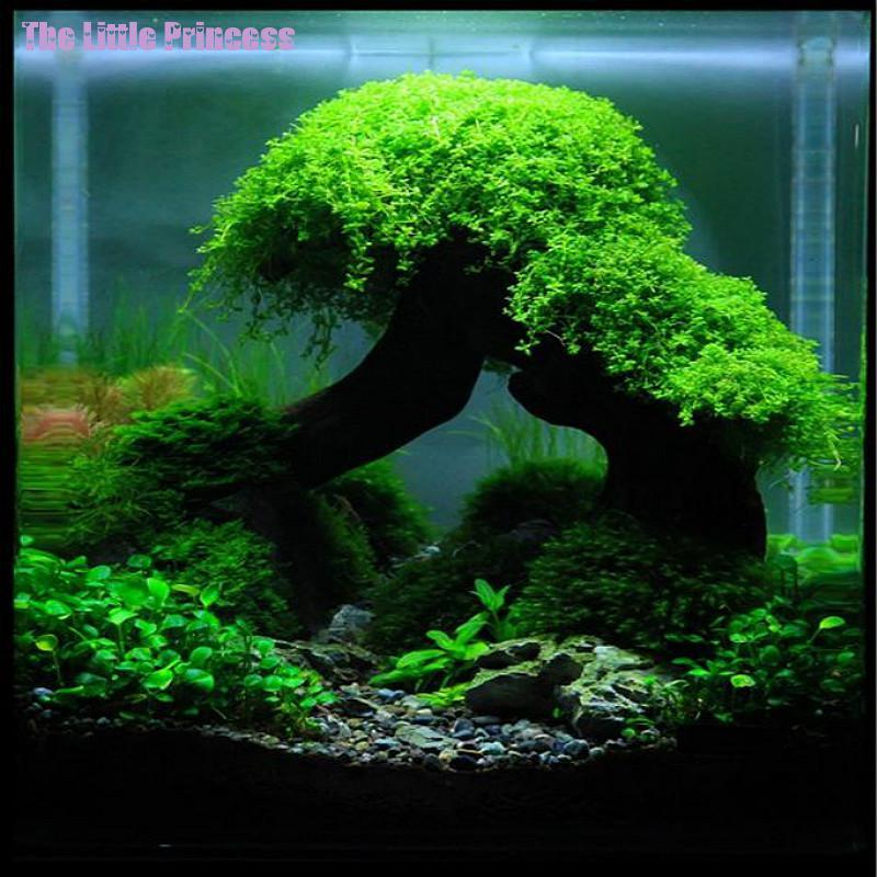 Hot sale ornamental grasses aquarium tree fish aquarium for Fish tank tree
