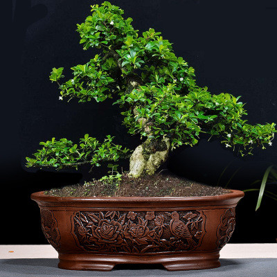Rétro violet sable bonsaï Pot de fleur grand intérieur balconnet simple jardin en céramique Bosai Pot embosser ZiSha Bosai