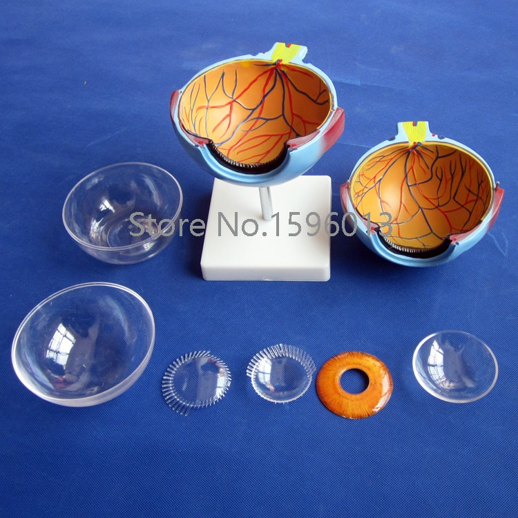 Яркая модель человеческого гигантского глаза, модель структуры глазного яблока, анатомическая модель глазного яблока