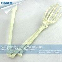 12325 CMAM TF14 Human Upper Limb Arm Skeleton Training Practice Model, Medical Science Educational Teaching Anatomical Models