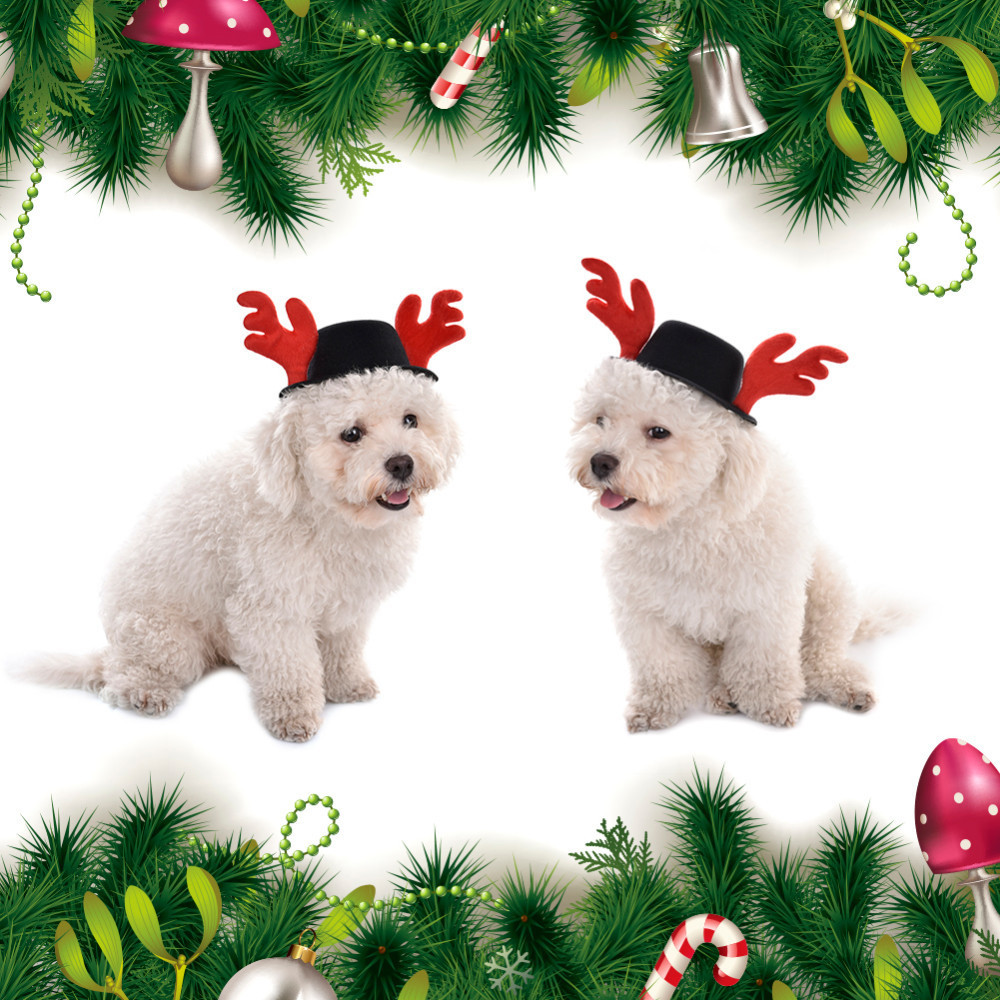 Christmas Series Pet Hat Only For Pets Party Festival Accessory Pet Cat Dog and Other Puppy Pet Santa Hat 2017 Dropshipping