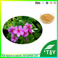 Madagascar Periwinkle Herb Extract Powder/Catharanthus roseus extract/Vinpocetine 800g/lot