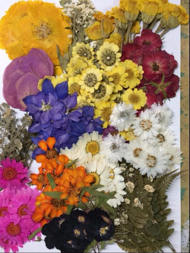 260pcs Assorted Pressed Dried Flowers Leaf Plant Herbarium For Jewelry Pendant Ring Earrings Flower Making Accessories