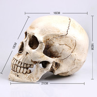Skull Decor Mongolian Head Replica Model Realistic Lifesize 1:1 Resin Human Skull Home Decoration Arts & Crafts Supplies craft