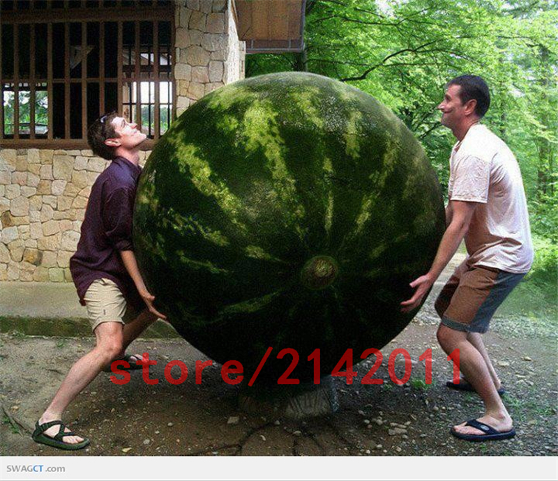 30-seed-bag-giant-watermelon-seeds-it-is-so-big-rare-Organic-Heirloom-vegetable-fruit-seeds.jpg