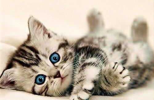 Squatting Cat Kitten Kitty Pet Animal Dangle Charm for European Bead Bracelets Fashion Jewelry for Women Man