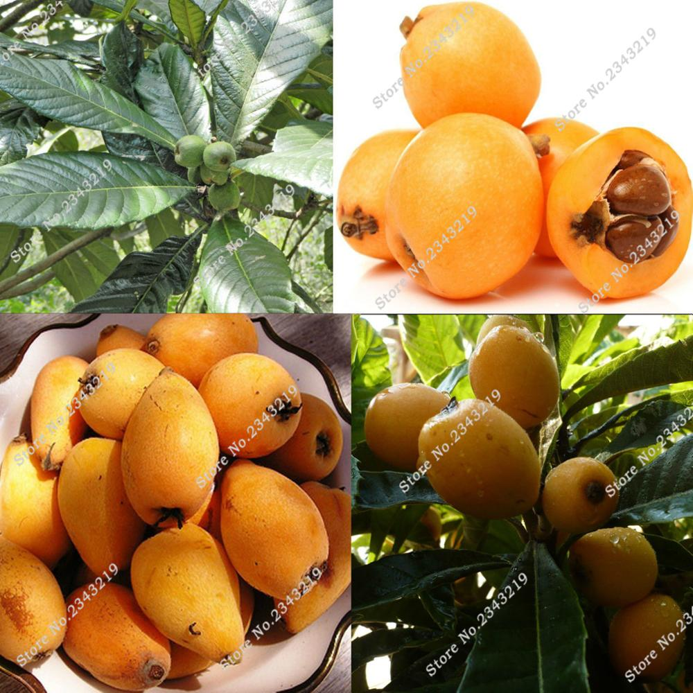 Online Get Cheap Plums Healthy Aliexpress Com Alibaba Group